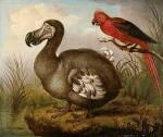 Hodges dodo en rode parkiet